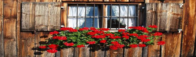 g rtnerei hauf die gr sste g rtnerei im westallg u beet und balkonpflanzen g rtnerei hauf die. Black Bedroom Furniture Sets. Home Design Ideas